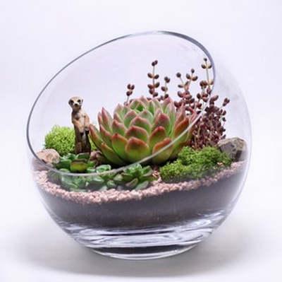 Комнатное растение в подарок женщине3